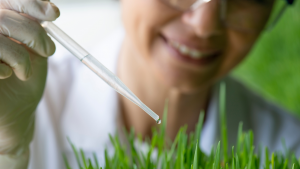 medical uses of wheatgrass