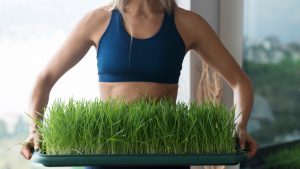 benefits of drinking wheatgrass daily