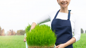 dental benefits of wheatgrass